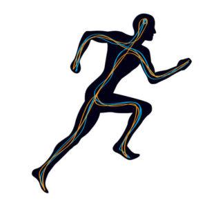 Sistema nervioso, deporte y nootrópicos